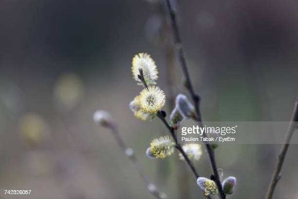 close-up of flower against blurred background - paulien tabak stock pictures, royalty-free photos & images