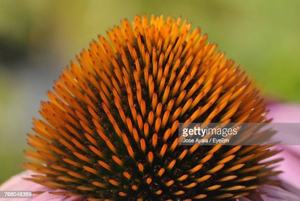 close-up of flower against blurred background - jose ayala stock pictures, royalty-free photos & images