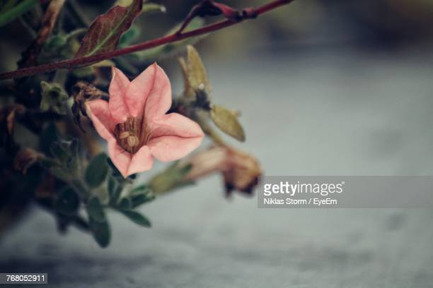 close-up of flower against blurred background - niklas storm eyeem stock photos and pictures