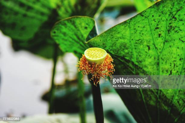 close-up of flower against blurred background - ko ko htike aung stock pictures, royalty-free photos & images