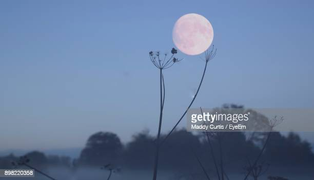 close-up of flower against clear sky at night - flower moon stock pictures, royalty-free photos & images