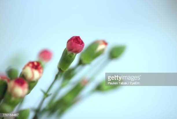 close-up of flower against clear sky - paulien tabak stock pictures, royalty-free photos & images
