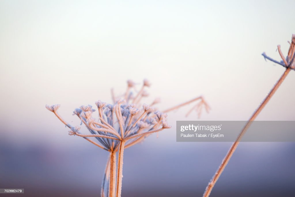 Close-Up Of Flower Against Sky : Stockfoto