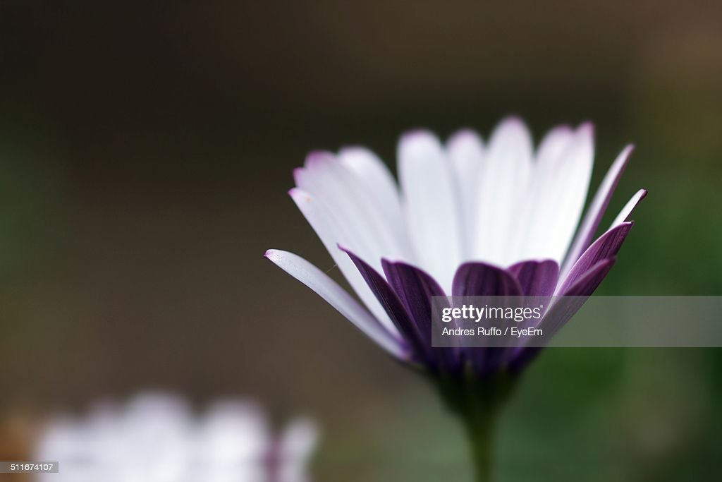 Close-up of flower blooming in garden : Stock Photo