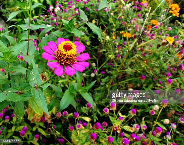 Close-Up Of Flower Blooming In Garden