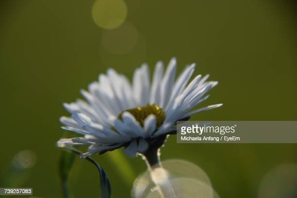 close-up of flower blooming outdoors - anfang stock pictures, royalty-free photos & images