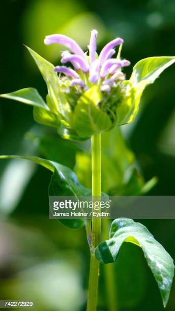 close-up of flower blooming outdoors - flower part stock pictures, royalty-free photos & images