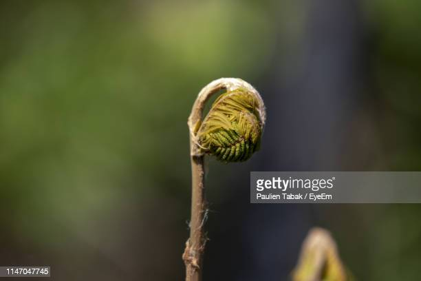 close-up of flower bud - paulien tabak stock pictures, royalty-free photos & images