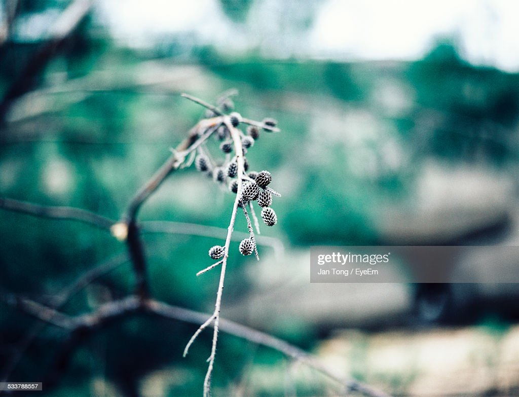 Close-Up Of Flower Buds In Park : Foto stock