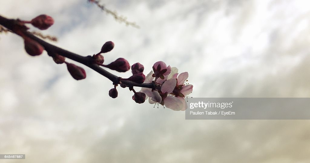 Close-Up Of Flower Buds : Stockfoto