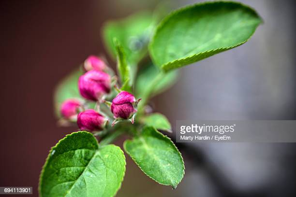 close-up of flower growing outdoors - marty hardin stock photos and pictures