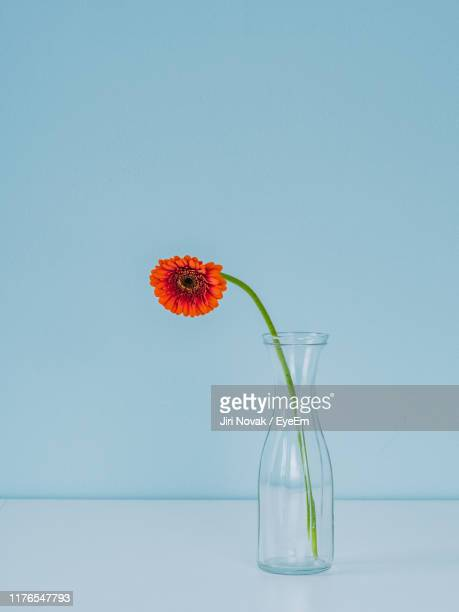 close-up of flower in vase on table against blue background - 花瓶 ストックフォトと画像