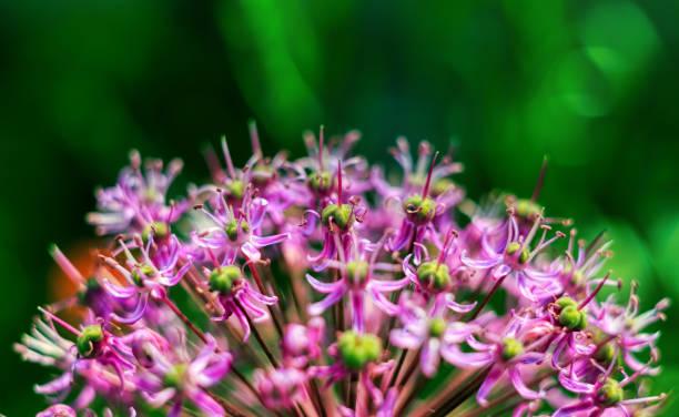 Close-up of flower, Litoměřice, Czech Republic