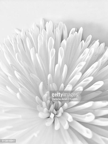 Close-up of flower over white background