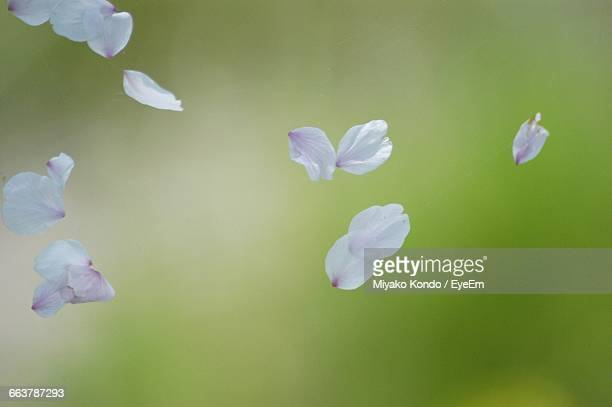 close-up of flower petals in mid-air - petal stock pictures, royalty-free photos & images