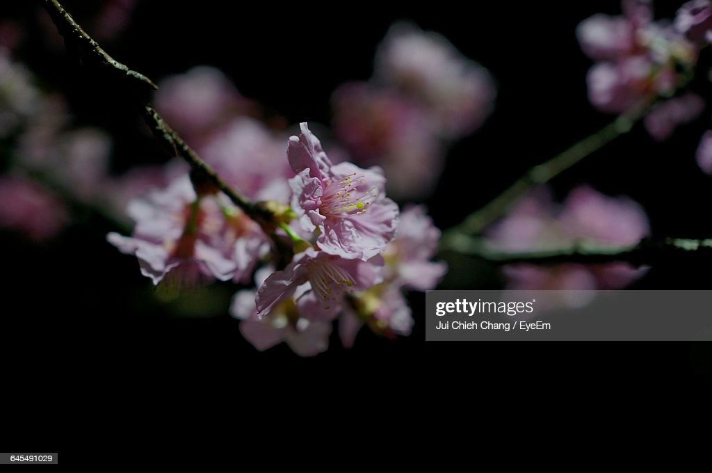 Close-Up Of Flower : Stock Photo