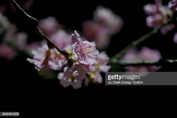 close-up of flower - chang jui chieh stock photos and pictures