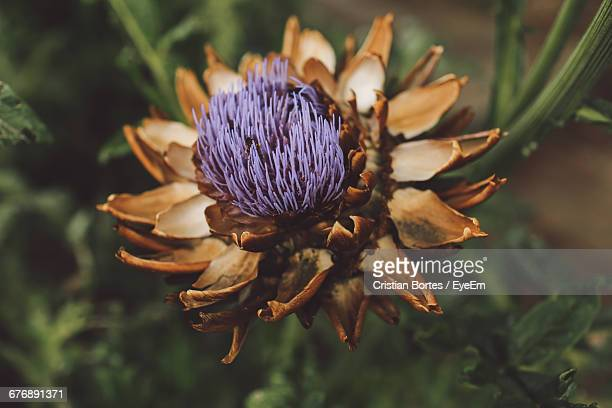 close-up of flower - bortes fotografías e imágenes de stock