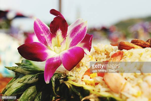 close-up of flower - nikitina stock pictures, royalty-free photos & images
