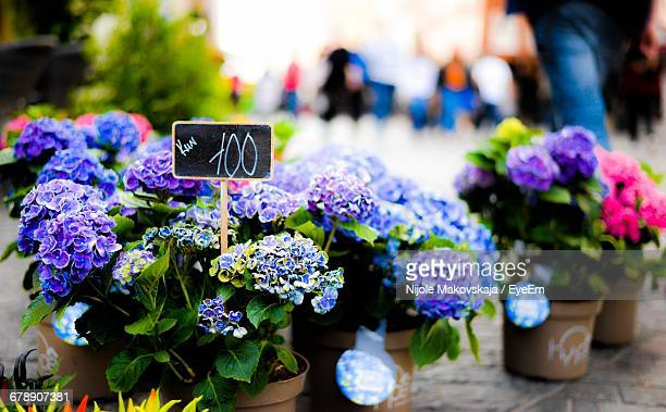 Close-Up Of Flower Pots On Footpath For Sale