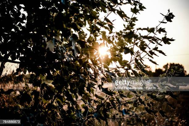 Close-Up Of Flower Tree Against Bright Sun