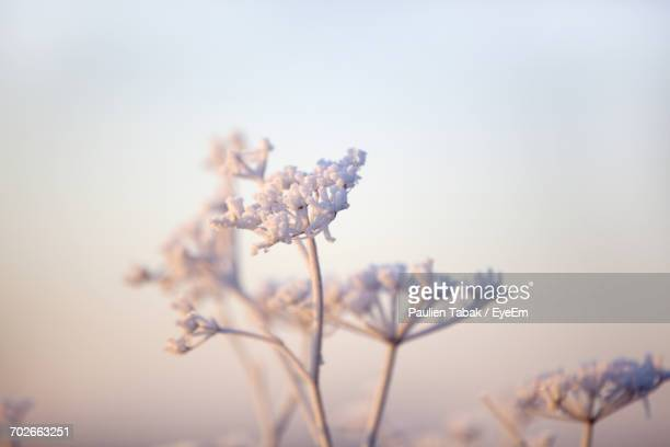 close-up of flower tree against sky - paulien tabak foto e immagini stock
