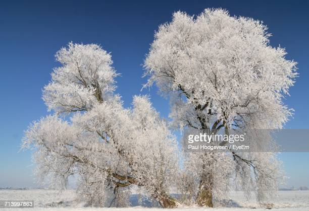 close-up of flower tree against sky - hoogeveen stock pictures, royalty-free photos & images