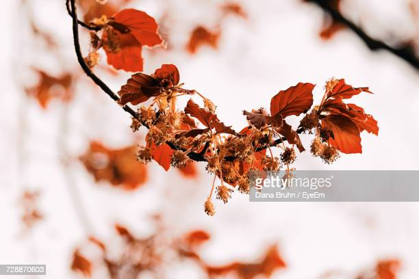 close-up of flower tree against sky - flower part stock pictures, royalty-free photos & images