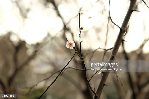Close-Up Of Flower Tree Against Sky
