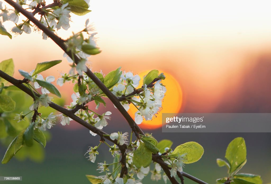 Close-Up Of Flower Tree Against Sky : Stockfoto