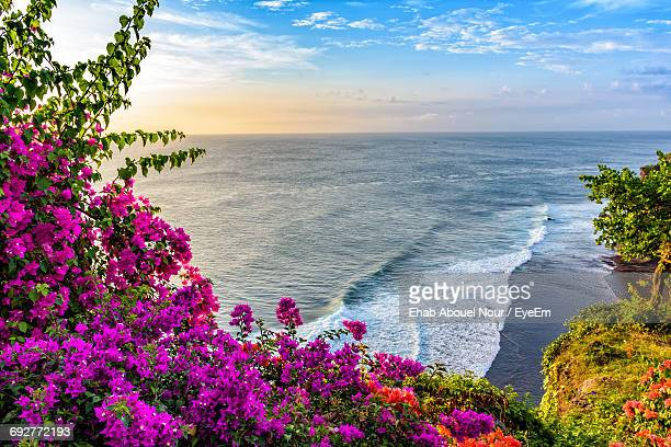 Close-Up Of Flower Tree By Sea Against Sky