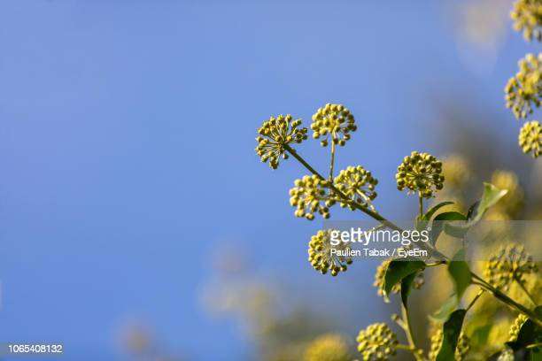 Close-Up Of Flowering Plant Against Clear Blue Sky