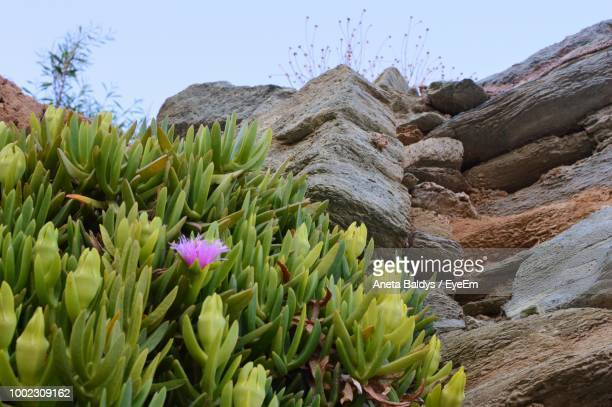 Close-Up Of Flowering Plant Against Rock