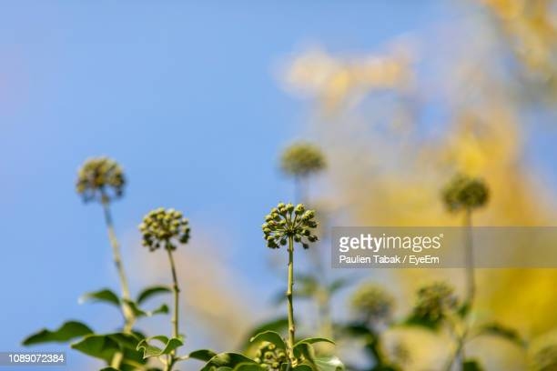 close-up of flowering plant against sky - paulien tabak stock pictures, royalty-free photos & images