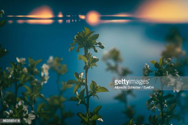close-up of flowering plant against sky - albrecht schlotter foto e immagini stock