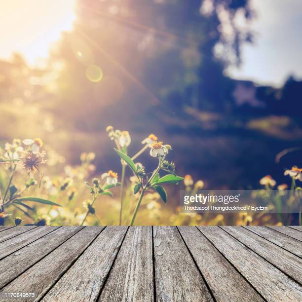close-up of flowering plant against wooden plank - onscherpe achtergrond stockfoto's en -beelden
