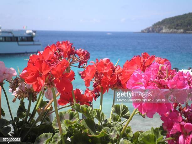 Close-Up Of Flowering Plant In Front Of Sea Against Sky At Apulia