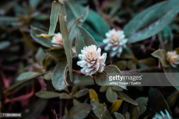 close-up of flowering plant leaves - jeffrey roque stock photos and pictures
