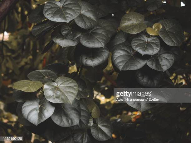 close-up of flowering plant leaves - apisit hiranpornpan stock pictures, royalty-free photos & images