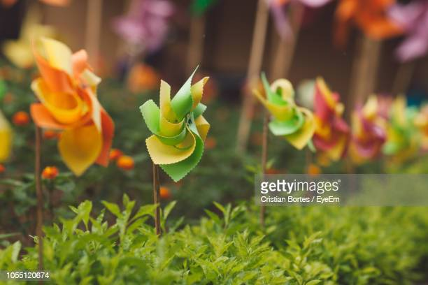 close-up of flowering plant on field - bortes stockfoto's en -beelden