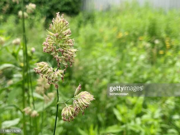 close-up of flowering plant on field - bortes foto e immagini stock