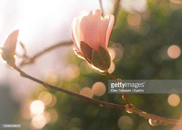 close-up of flowering plant - bud stock pictures, royalty-free photos & images