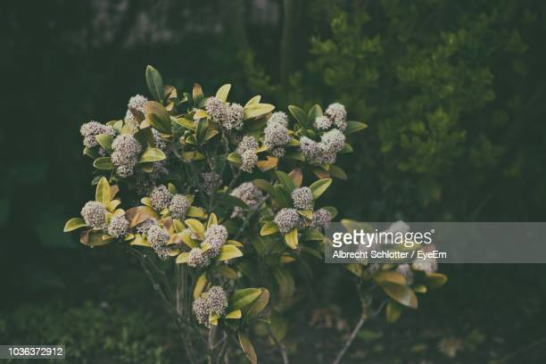 close-up of flowering plant - albrecht schlotter foto e immagini stock