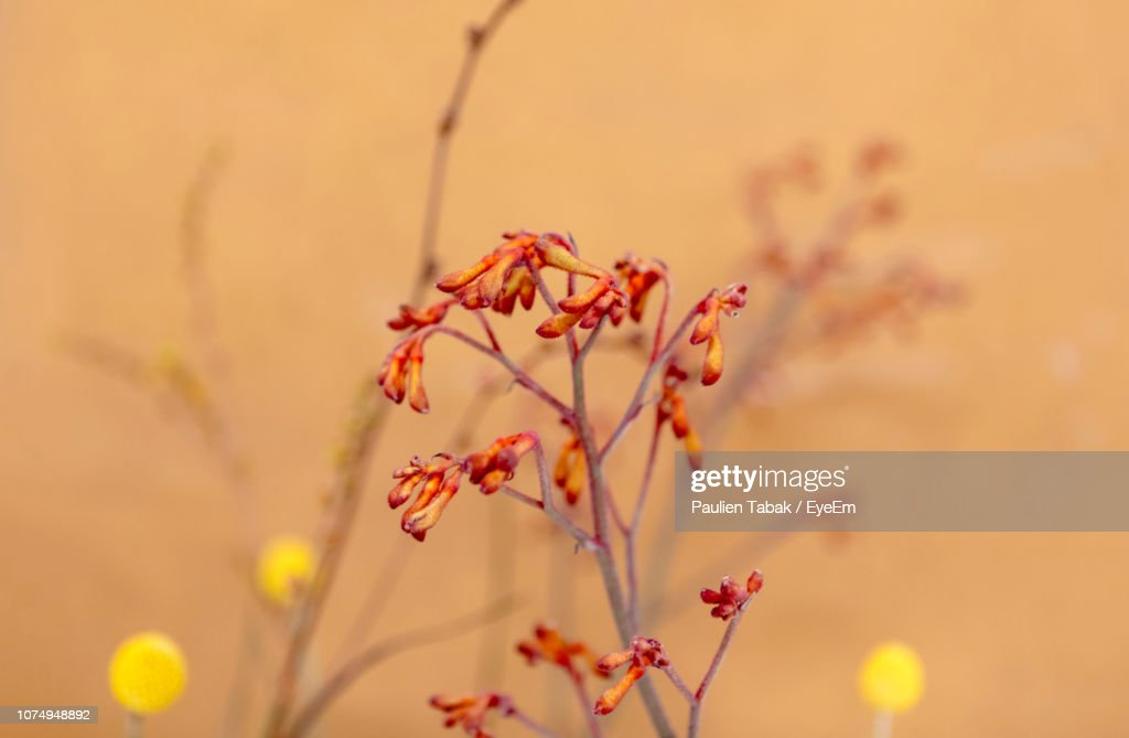 Close-Up Of Flowering Plant : Stockfoto