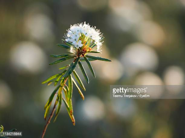 close-up of flowering plant - teemu tretjakov stock pictures, royalty-free photos & images