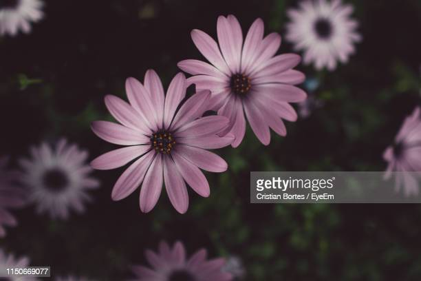 close-up of flowering plant - bortes stock pictures, royalty-free photos & images