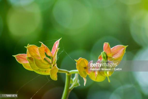 close-up of flowering plant - rahmad himawan stock photos and pictures