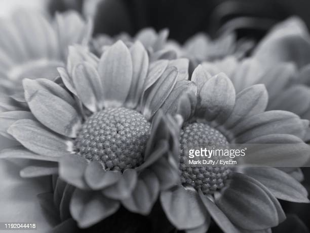 close-up of flowering plant - mark bloom stock pictures, royalty-free photos & images