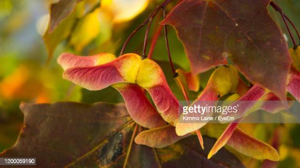 close-up of flowering plant - vanda stock pictures, royalty-free photos & images