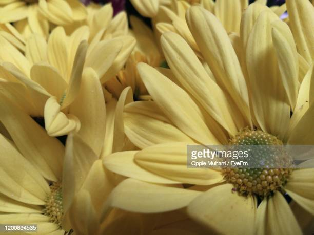 close-up of flowering plant - oppie muharti stock pictures, royalty-free photos & images